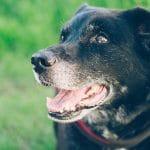 Adopt a shelter animal