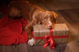 Can pets be gifts?