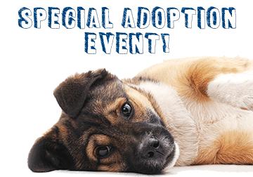 February's Special Adoption Event!