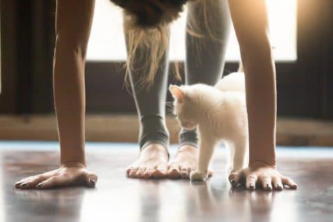 Kitten Yoga!