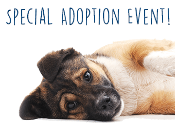 Special Adoption Event!